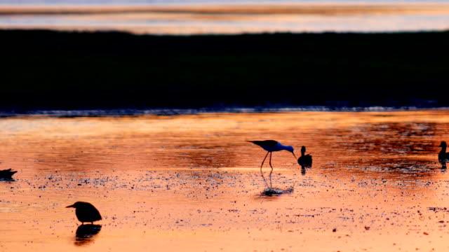 Bird habitat video