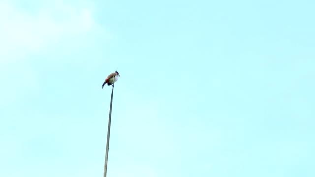bird hold on tree video