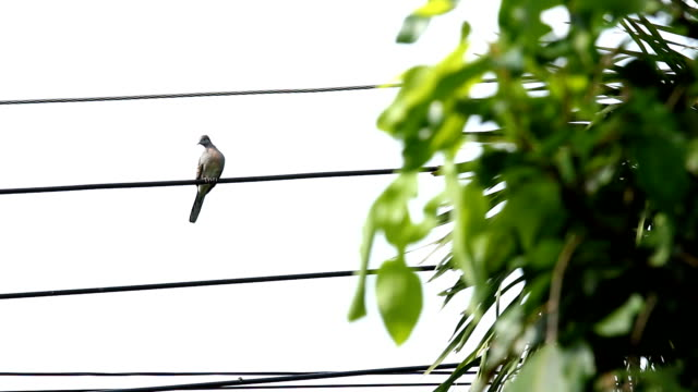 bird hold on wire video
