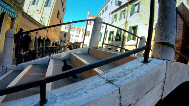 A bird hopping on the stairs on the bridge in Venice Italy video