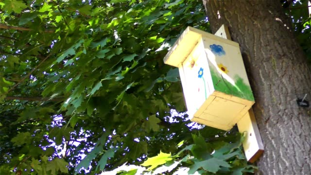 Bird house on the tree video