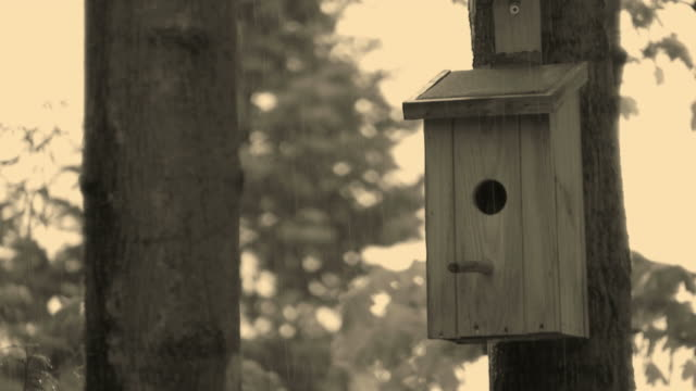 HD: bird house video