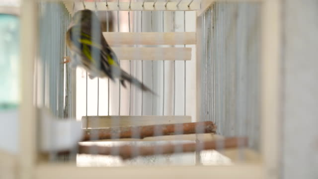vogel im käfig - käfig stock-videos und b-roll-filmmaterial