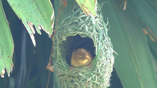 vogel im nest des vogels - nest stock-videos und b-roll-filmmaterial