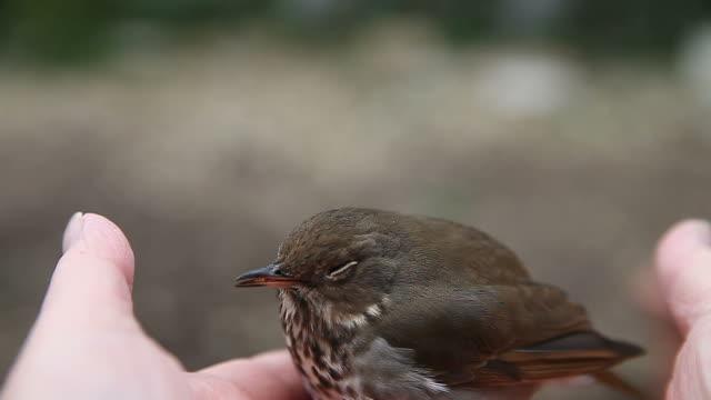 ptak w ręku - młody ptak filmów i materiałów b-roll
