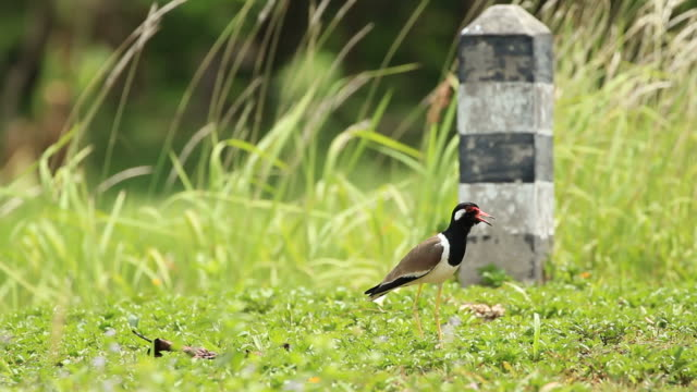 bird in the wild - uzun adımlarla yürümek stok videoları ve detay görüntü çekimi