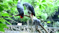 istock Bird in the zoo 465980629