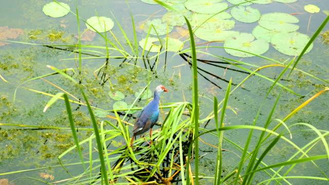 Bird in Tropical Green Lake video