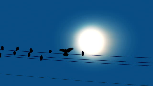 bird lands on wire in front of sun - filo metallico video stock e b–roll