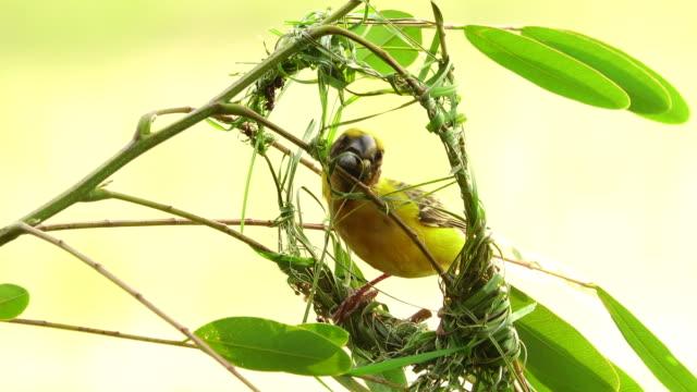 vogel vögel nisten machen - nest stock-videos und b-roll-filmmaterial