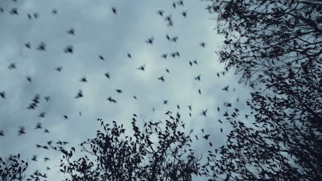 bird migration - птица стоковые видео и кадры b-roll