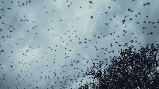 Bird Migration video