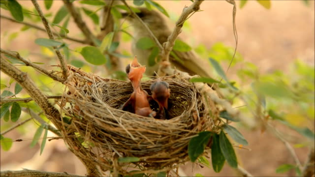 bird nest - nest stock-videos und b-roll-filmmaterial