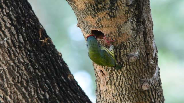 Bird nest video