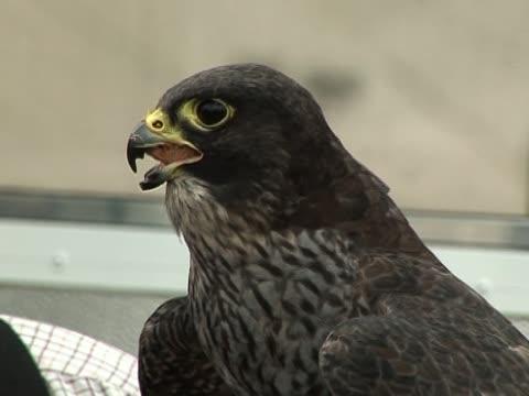Bird of Prey Eating