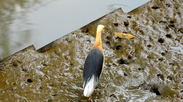 птица на mudflat - илистая пойма стоковые видео и кадры b-roll