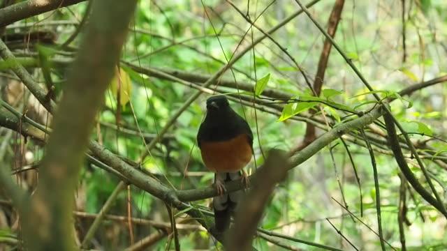 bird on a tree inside a rain forest.