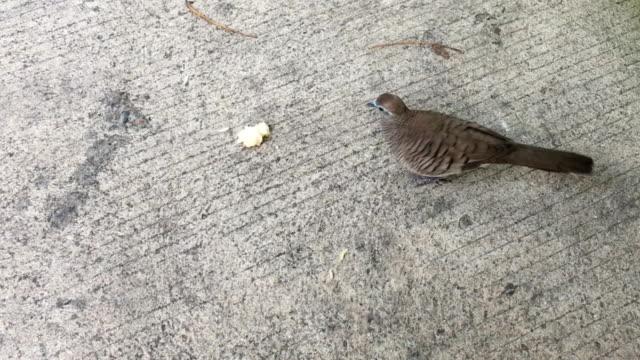 Bird on the ground cement. video