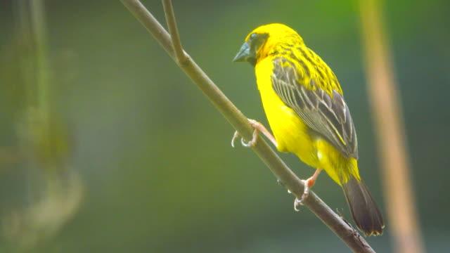 4K: Bird on the tree