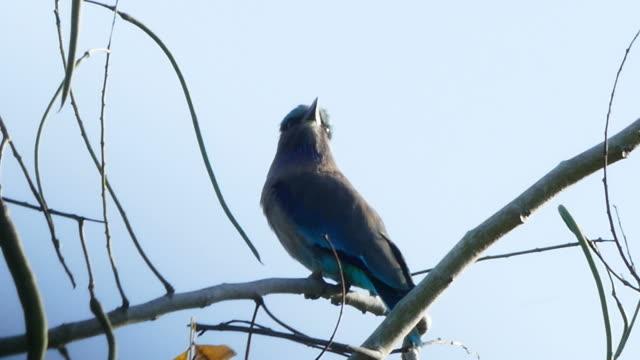 Bird on tree branch video