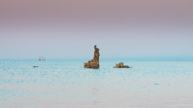 Bird Perched on Mono Lake Tufa Pillar video