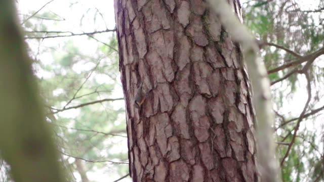 Bird pick worms on a tree video