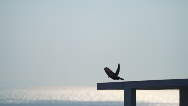 Bird silhouette sitting and flying away on rooftop with sea reflection