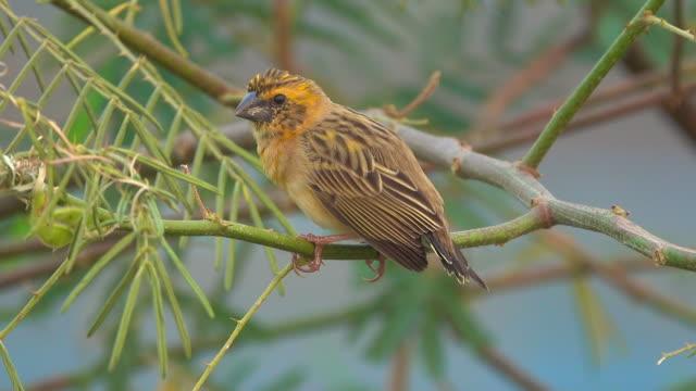 bird singing on a tree