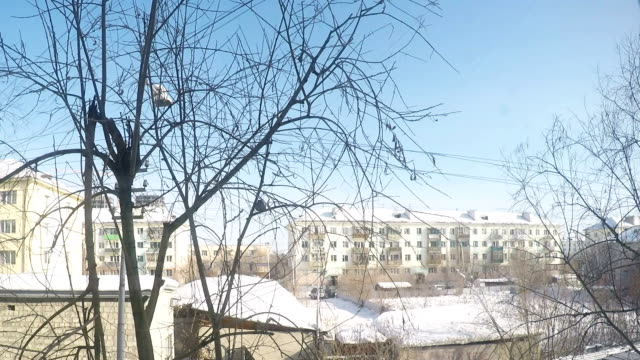 A bird sits on a branch in winter Stock Footage video