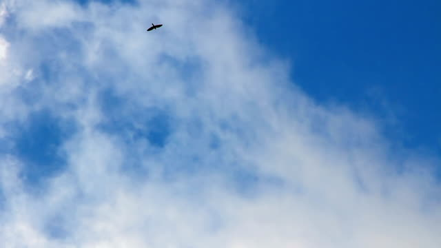 Bird soaring in the clouds Bird soaring high in the clouds at azure sky diving to the ground stock videos & royalty-free footage