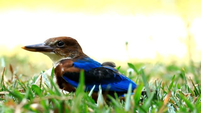 Bird standing on a garden.