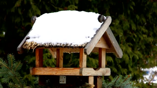 bird table video