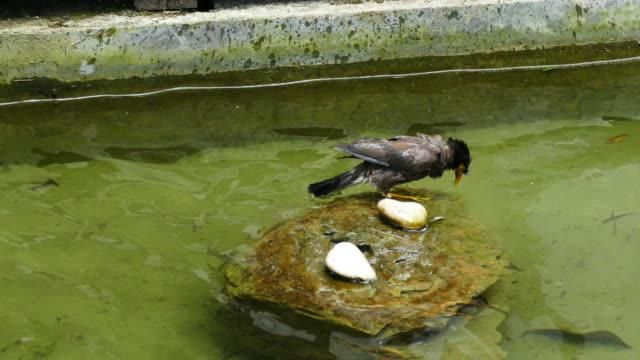 fågeln tar ett bad - djurlem bildbanksvideor och videomaterial från bakom kulisserna