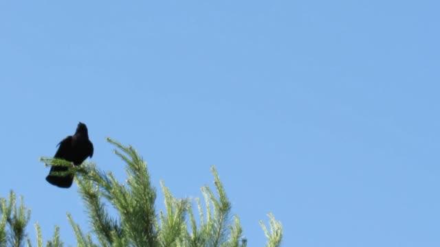 bird tree needles nature branch
