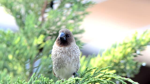 bird - djurlem bildbanksvideor och videomaterial från bakom kulisserna