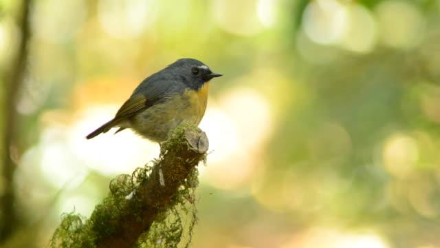 uccello - fronda video stock e b–roll