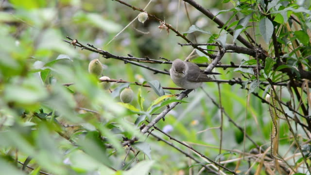 bird - endemisch stock-videos und b-roll-filmmaterial