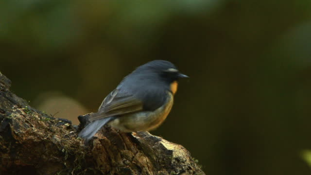 Pássaro - vídeo