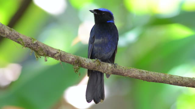 fågel - pippi bildbanksvideor och videomaterial från bakom kulisserna
