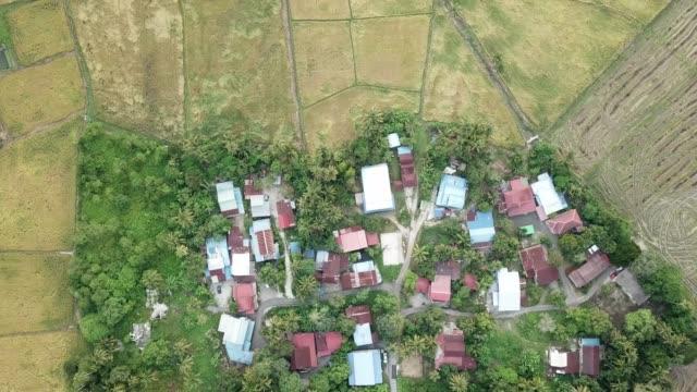 vogelblick über malaien dorf im reisfeld - strohhut stock-videos und b-roll-filmmaterial