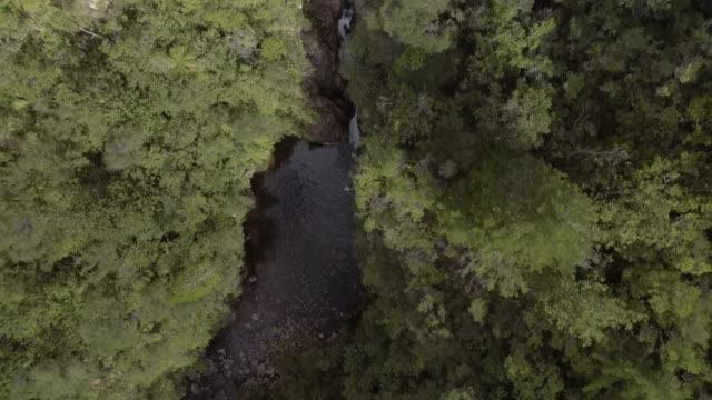 birdeye river , forest video