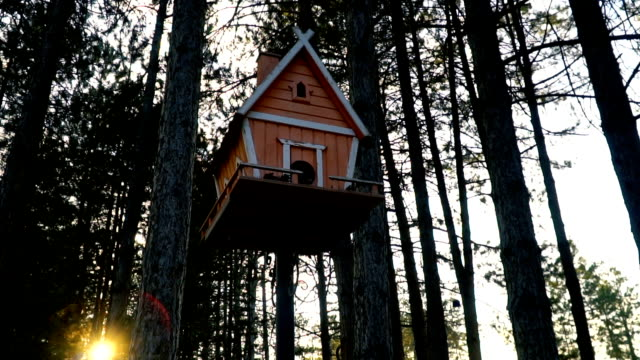 Birdhouse on a pine tree