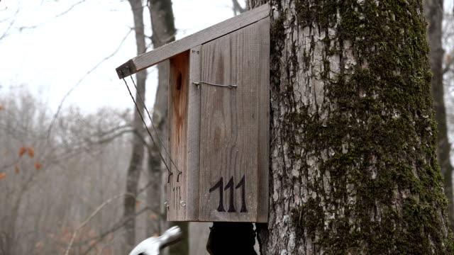VARNA, BULGARIA - FEB 22, 2017 - Birdhouse on tree instalation video