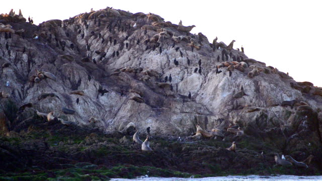 Birds and seals at Pebble Beach Seventeen mile drive at sunset video