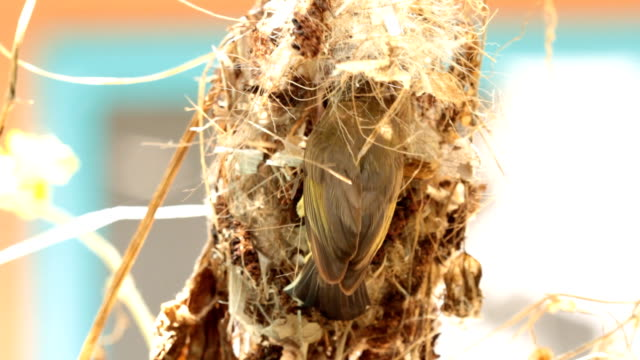 Birds are building nests. video