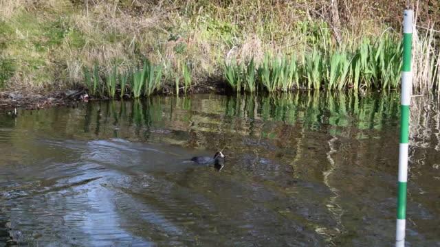 スラロームの池に巣を作る鳥たち - 水鳥点の映像素材/bロール