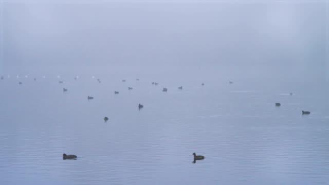 霧の川の鳥たち - シベリア点の映像素材/bロール