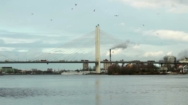 Birds circling in the sky above cable-stayed bridge video