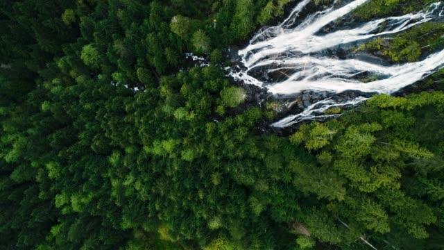 vídeos de stock, filmes e b-roll de pássaros olho vista aérea acima cachoeiras enormes no dossel de floresta tropical árvore verde - rio