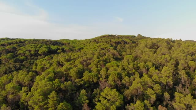 A birds eye view of a dense green temperate forest in Italy's Tuscan region